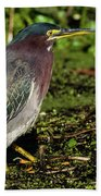 Green Heron In Swampy Water Beach Towel