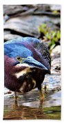 Green Heron Male Beach Towel