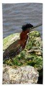 Green Heron Ruffled Feathers Beach Towel