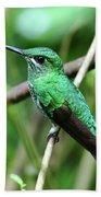 Green Crowned Brilliant Hummingbird Beach Towel