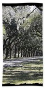Green Lane With Live Oaks - Black Framing Beach Towel