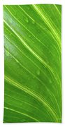 Green Living Beach Towel