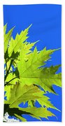 Green Maple Leaves Beach Towel