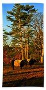 Green Pastures Beach Sheet