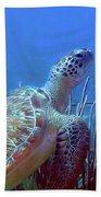 Green Sea Turtle 3 Beach Towel