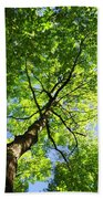 Summer Tree Canopy Beach Towel