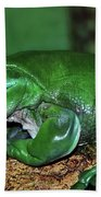 Green Tree Frog With A Smile Beach Towel by Kaye Menner