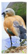 Green Winged Wood Duck 1 Beach Towel