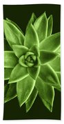 Greenery Succulent Echeveria Agavoides Flower Beach Towel