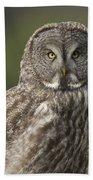 Great Gray Owl Portrait Beach Towel