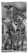 Grevy Zebra Party  7528bwc Beach Towel
