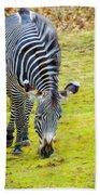 Grevys Zebra Left Beach Towel