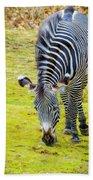 Grevys Zebra Right Beach Towel