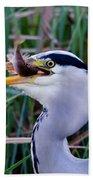 Grey Heron With Fish Beach Sheet
