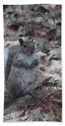 Grey Squirrel Beach Towel