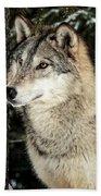 Grey Wolf Beach Towel