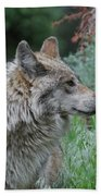 Grey Wolf Profile 2 Beach Towel