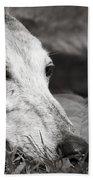 Greyful Beach Towel by Angela Rath
