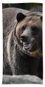 Grizzly Bear 3 Beach Towel
