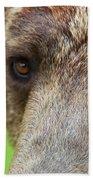 Grizzly Bear Arctos Ursus Beach Towel