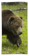 Grizzly Bear Boar-signed-#8517 Beach Towel