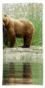Grizzly Bear Family  Beach Towel