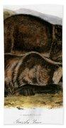 Grizzly Bear (ursus Ferox) Beach Towel