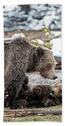 Grizzly Cub With Mother Beach Towel by Scott Read