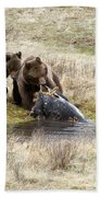 Grizzly Dinner Beach Towel