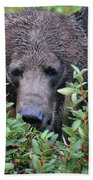 Grizzly In The Berry Bushes Beach Towel
