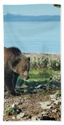 Grizzly Sow At Yellowstone Lake Beach Towel