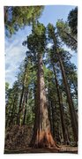 Grove Of Big Trees Beach Towel