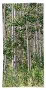 Grove Of Quaking Aspen Aka Quakies Beach Towel