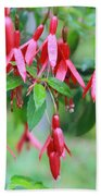 Growing In Red And Purple Beach Towel