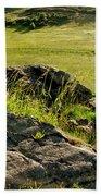 Growing On Rocks. Beach Sheet