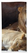 Growling Male Lion In Den With Two Females Beach Towel