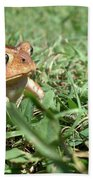 Grumpy Toad Beach Sheet