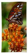 Gulf Fritillary On Butterflyweed Beach Towel