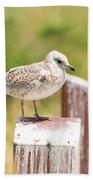 Gull On A Post Beach Towel