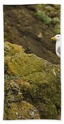 Gull On Cliff Edge Beach Towel