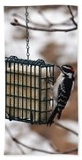Hairy Woodpecker 2 Beach Towel