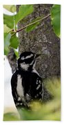 Downy Woodpecker 01 Beach Towel