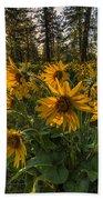 Hamblen Park Sunshine Beach Towel