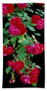 Hanging Roses 2593 Beach Towel