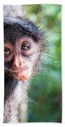 Hanging Spider Monkey Beach Towel