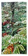 Hapu'u Fern Rainforest Beach Towel
