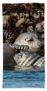 Harbor Seal And Pup Beach Towel
