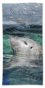 Harbor Seal Poking His Head Out Of The Water Beach Towel