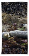 Harbor Seals Basking - Oregon Coast Beach Towel