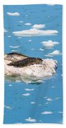 Harbor Seals On Clouds Of Ice Beach Towel